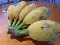 ちびゴリラバナナで幸せホルモン