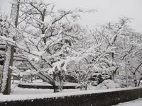 冬の桜も綺麗ですネ