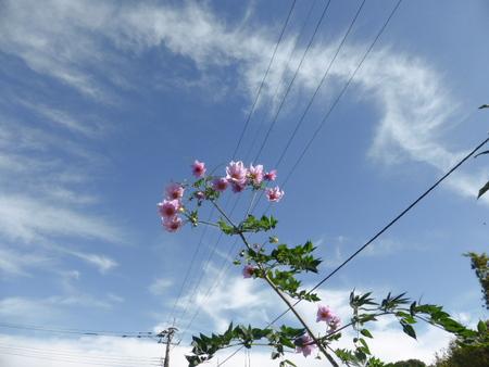 電線の五線譜に舞う花