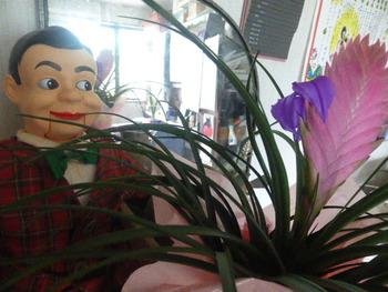 メフィラス星人花を見つめるタロー