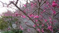 春は すぐそこ、