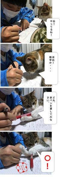 赤ペンにゃんこ先生!!