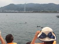 イルカの夏♪♪