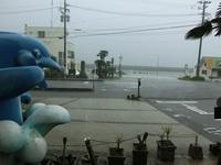 雨でもイルカは元気!!!