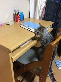 猫の手も借りたい!!