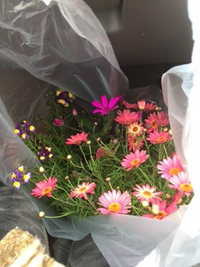 花 を買いに(*^^*)