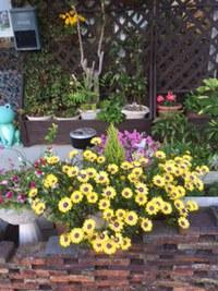 閉店時間 間際の花壇です(^^)
