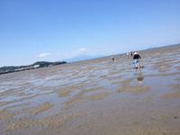 マテ貝採り