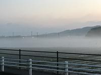 霧に包まれたレタス畑