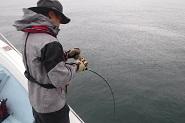 海南丸10月の釣果