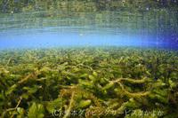 透明度30mの湧水ポイントでフォトダイブのご案内