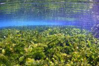 今日は熊本湧水ポイントでフォトダイビングのご案内