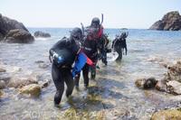 天草の妙見ヶ浦で、熊大と県立大ダイビング部の初級スキューバダイビングライセンス講習