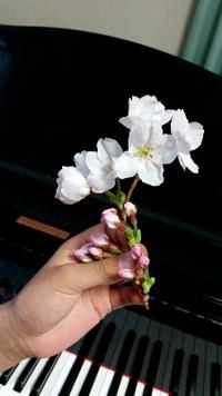 きれいな桜とは対照的な話。