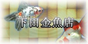 下田金魚店